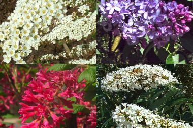 Hæk til sommerfugle og insekter