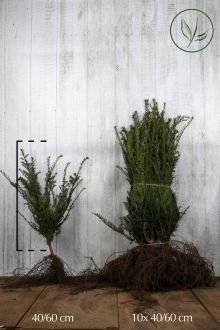 Almindelig taks Barrods 40-60 cm Ekstra kvalitet
