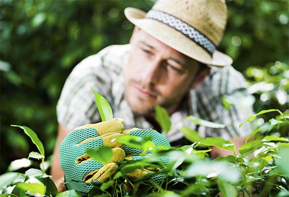 Hækplanternes kvalitet