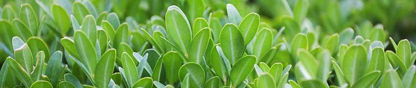 En grøn ramme rundt om haven - hurtigt og billigt