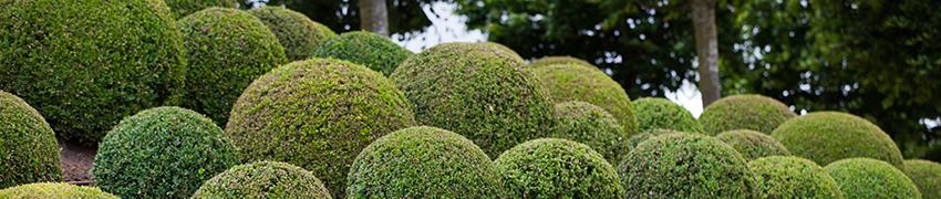 Hækplanter i alskens størrelser og former