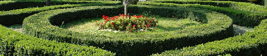 Hækplanter som haveplante