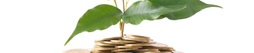 Hækplanter online: sikker betaling