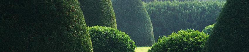 Køb nåletræer online