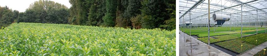 Hækplanter: fra vores planteskoler til din have